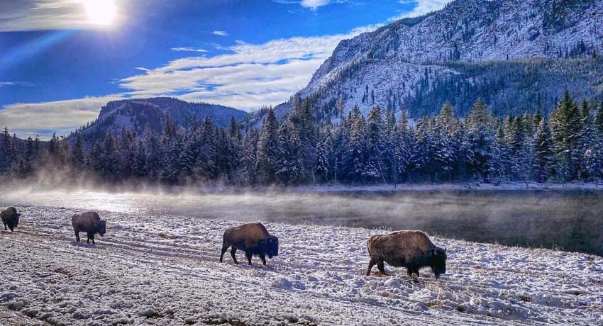 Yellowstone National Park Nearby
